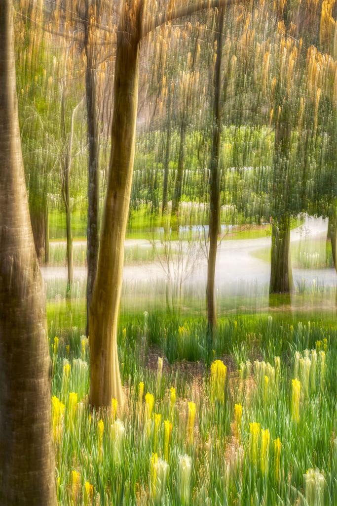 Impressions of Spring by kvphoto