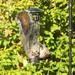 The Squirrels Are Back - Good News!