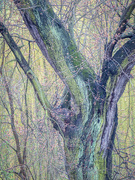 2nd May 2021 - Spring tree trunk