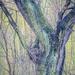 Spring tree trunk