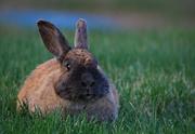 1st May 2021 - Bunny