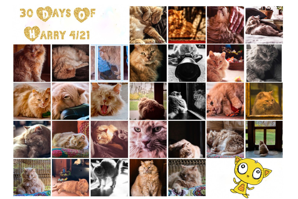 30 Days of Harry by mzzhope