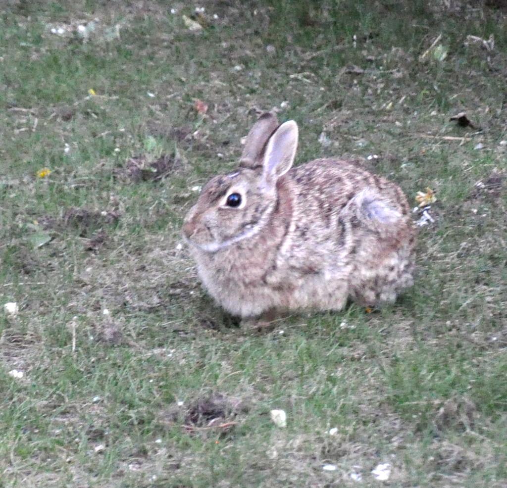 Bunny by sailingmusic