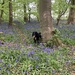 Girl among the bluebells!