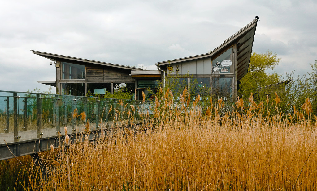 Attenborough Nature Reserve Visitor Centre by phil_howcroft