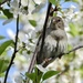 Sparrow in the cherry tree