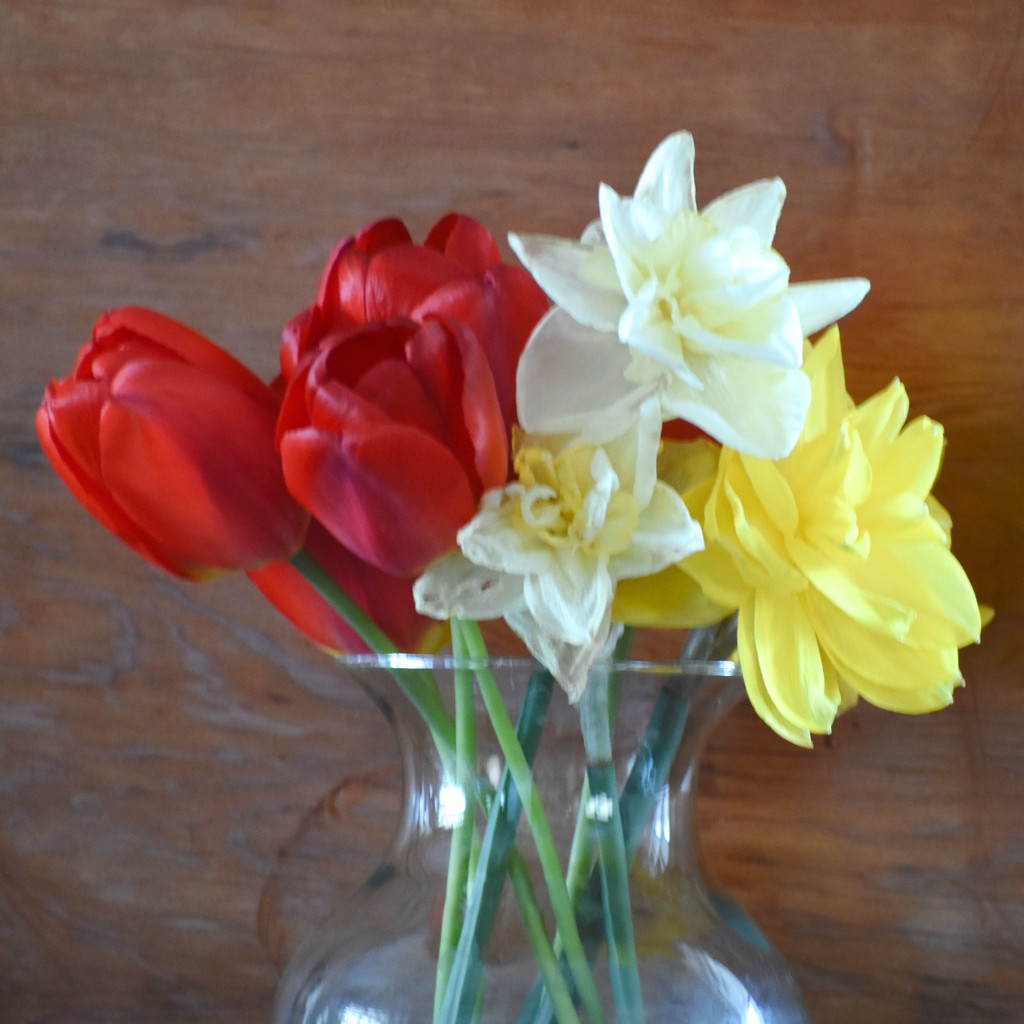 First Spring Flowers From My Garden by bjywamer