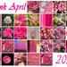Pink April 21 Complete