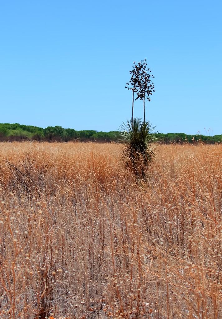 Grassland by blueberry1222