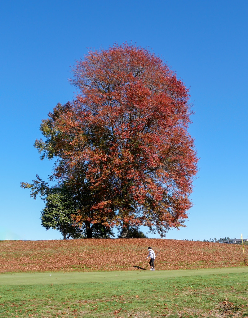 Beautiful Autumn Day on the Golf Course by yorkshirekiwi