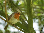 3rd May 2021 - Lovely robin posing for me!