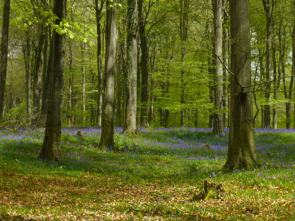 Ancient Woodland  by 30pics4jackiesdiamond