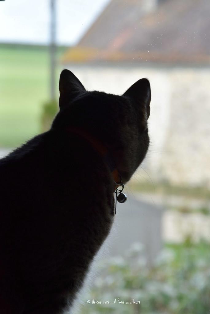 looking outside by parisouailleurs