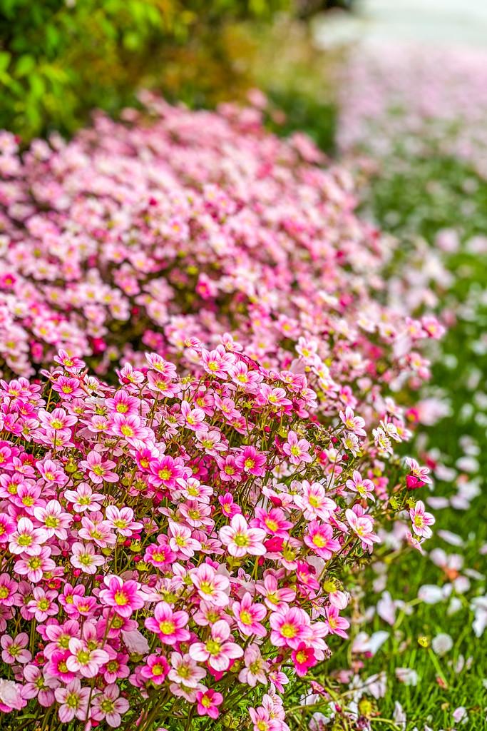 Mom's Flowers by kwind