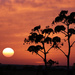 Mgarr Sunset by elza