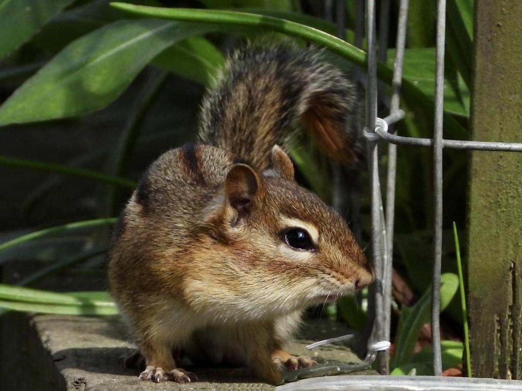 garden visitor by amyk