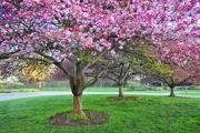 2nd May 2021 - Morning Calm at the Park