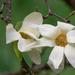 Crystal Spring Rhododendron Garden