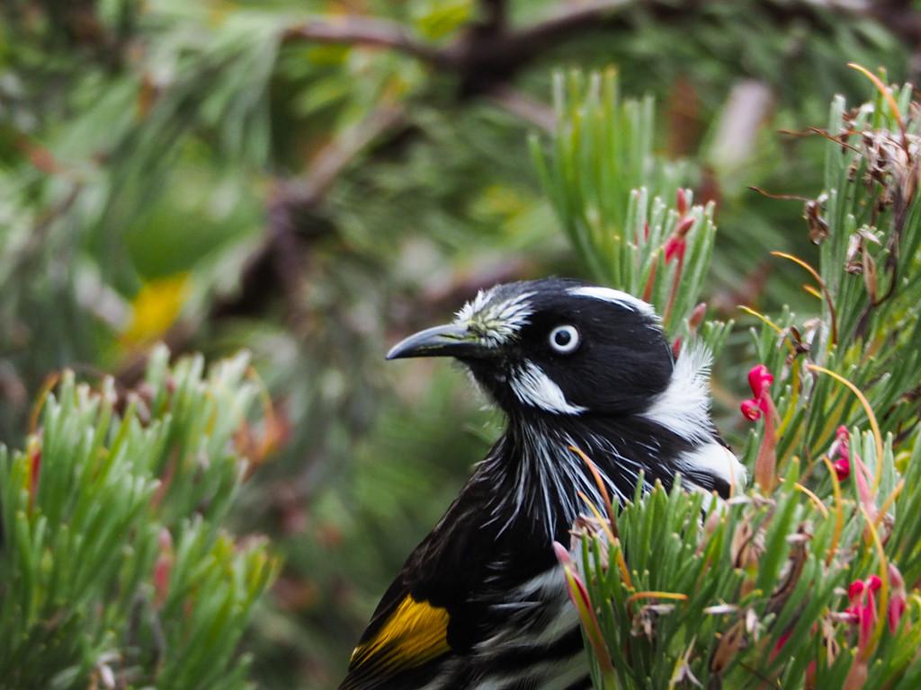 Honey Bird by katford