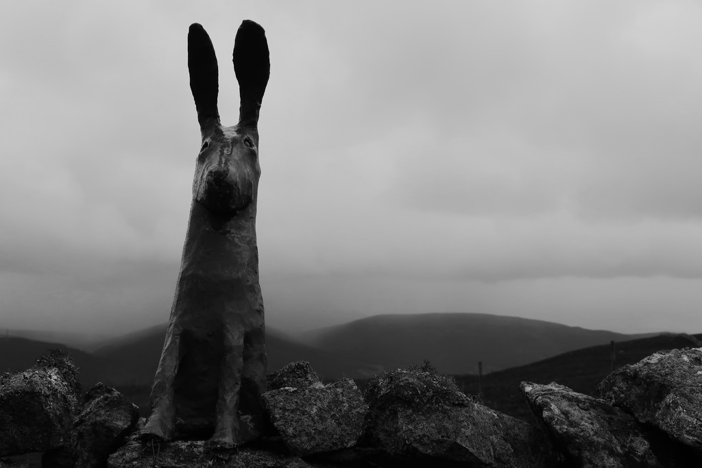 The Mysterious Pannanich Hares by jamibann