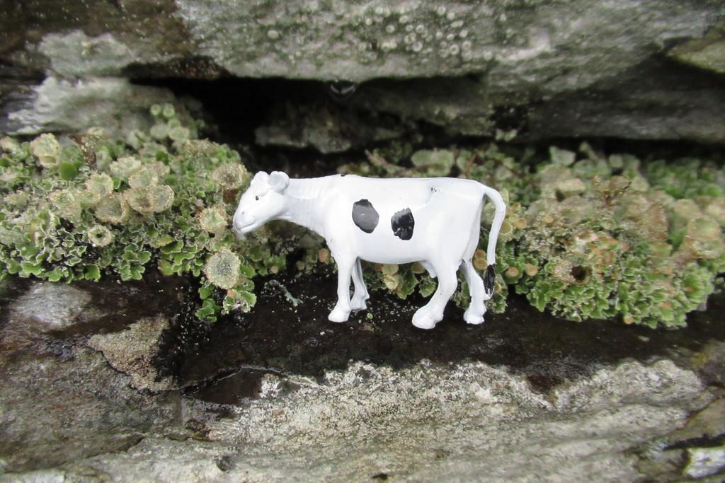 Hujenia in the lichen by anniesue