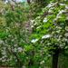 Flowering Tree and Bush