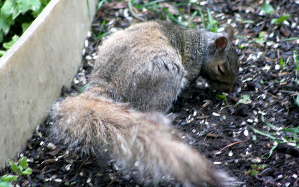 This squirrel - never seen before by bruni