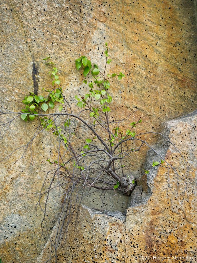 Rock crawler by helstor365