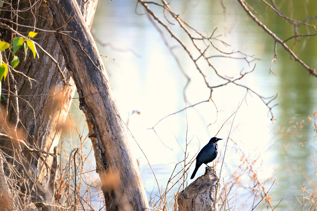 Bird At Pond by gq