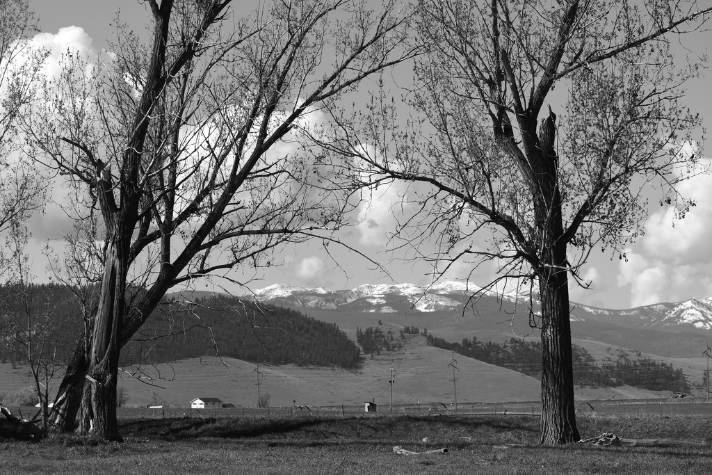 Long View Of The Mission Mountain Range by bjywamer