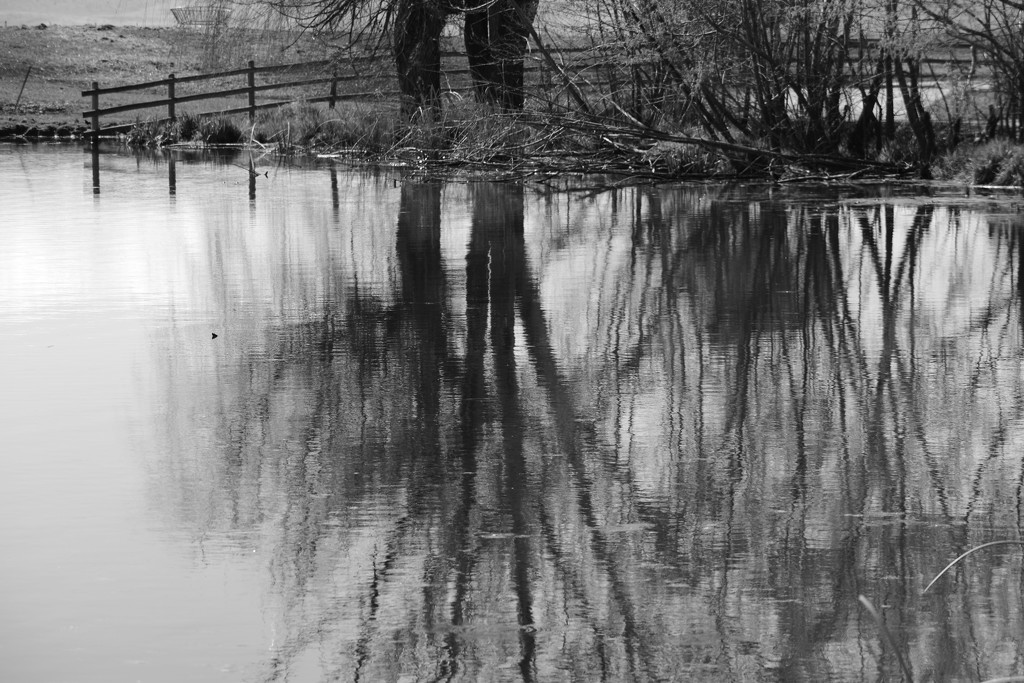 Reflections In Black & White by bjywamer