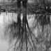 Reflections In Black & White