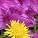 Flowers & Weeds or Just Flowers