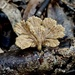 Fungi growth