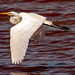 The Egret Took Off!  by rickster549