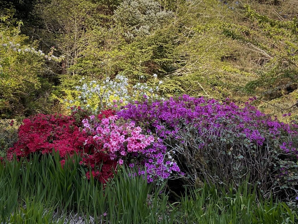 Jim's Monet Garden by jgpittenger