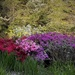 Jim's Monet Garden