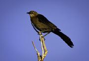 2nd May 2021 - backyard bird