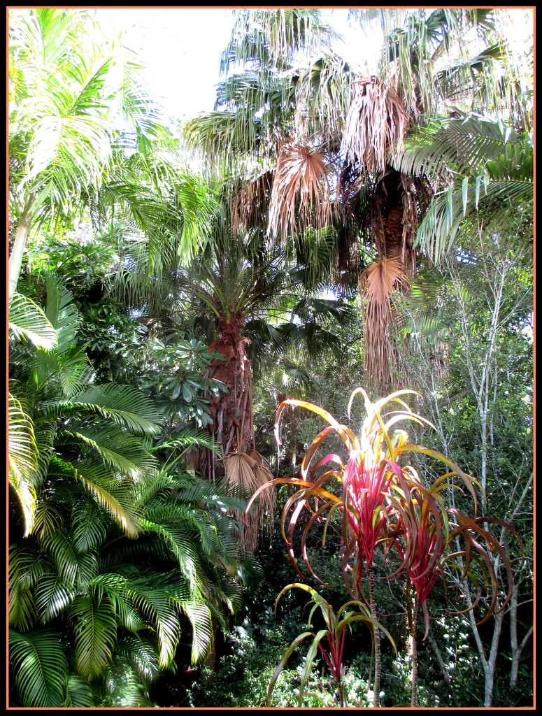 another one of my jungle garden looking the other way by 777margo
