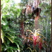 another one of my jungle garden looking the other way