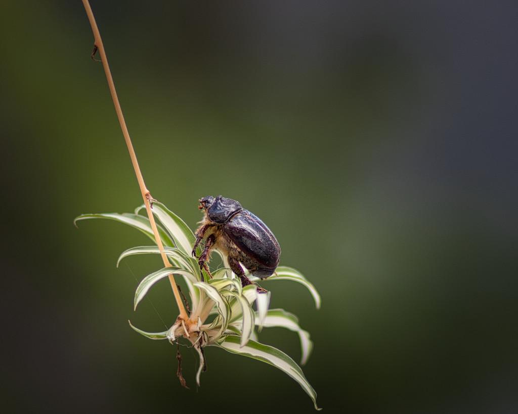 Macro Nature Shot with Bokeh by suez1e