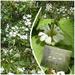 White May