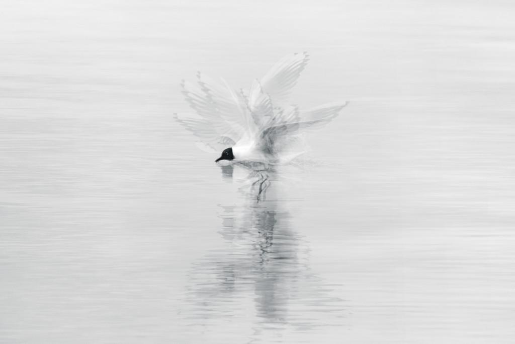 A Landing by humphreyhippo