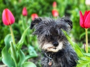 3rd May 2021 - Tiptoe Through the Tulips