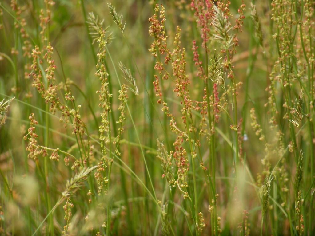 Beautiful weeds... by marlboromaam