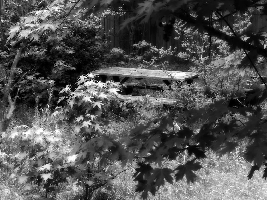 Intimate picnic spot... by marlboromaam