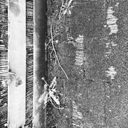 5th May 2021 - Nature's barcode