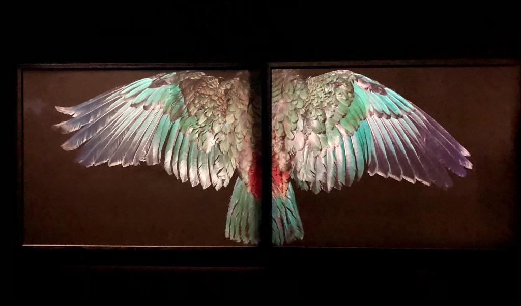 Wings by brigette