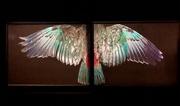 6th May 2021 - Wings