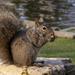 Kariya Park Squirrel